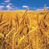 Мониторинг рынка сельскохозяйственных и продовольственных товаров