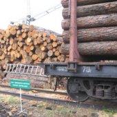 Лес снова можно декларировать в Хакасии