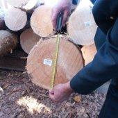 Единство методов измерения леса – минимизация рисков